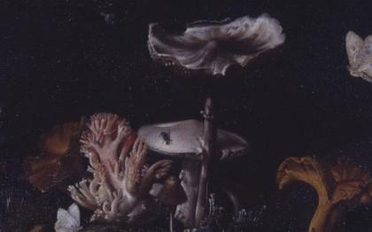 Nature morte, champignons, lézard et insectes