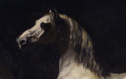Cheval arabe blanc-gris